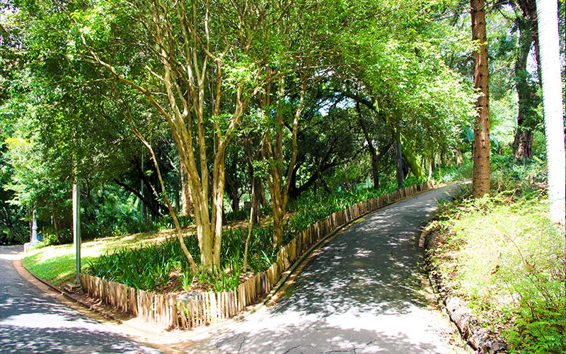 Area-verde-bairro-de-Higienopolis